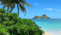 Чудесный остров Монтипью