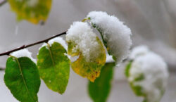 Снег возможен на севере Казахстана